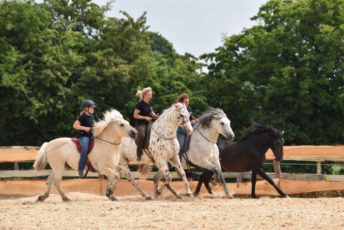 Pferdefestival Grynmölle Katja Hunold